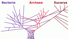 phylogenetictree_horizontal_transfers-300x167