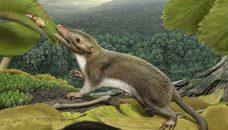 Dernier Ancêtre commun hypothétique des mammifères placentaires: reconstitution