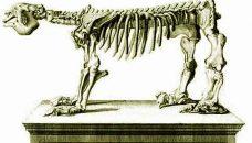 MegatheriumSqueletteCuvier1812