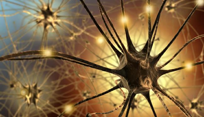 Image d'un neurone