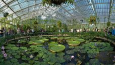 1280px-Kew_Gardens_Waterlily_House_-_Sept_2008