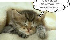 chat dort