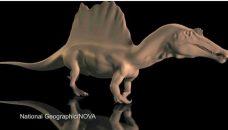 Bien que rampant, le Spinosaurus nouveau porte haut sa crête!