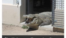 Quand la température grimpe, les crocos sortent les maillots, et les prévisions s'enflamment !