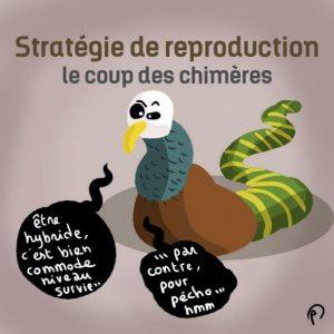 Stratégie de reproduction des chimères