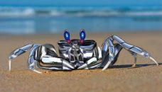Des femelles crabes sous le charme de robots danseurs