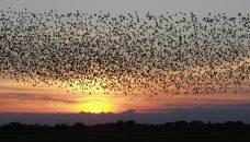 Tous les oiseaux du monde sur un seul arbre !
