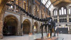 Les baleines, c'est assez ! Sauvons plutôt le Diplodocus… Ou pas.