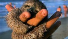 i-21c1354f193a19922318ee91e143cc40-Favorite_17_-_Sloth_m