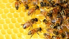 La fabrication du miel