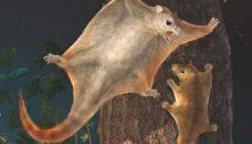 Au Jurassique, les Mammifères s'éclatent.