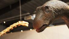 Les rencontres du Dinoblog saison 2 : programme