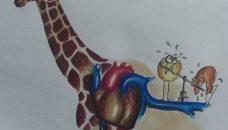 Le génome de la girafe éclaire les chercheurs sur le cœur humain