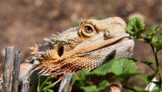 Récentes découvertes sur le monde animal : flash infos