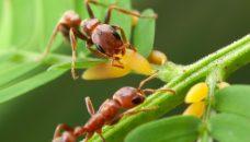 10 nouvelles histoires extraordinaires chez nos amies les fourmis
