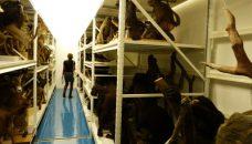 Le centre de conservation et d'étude des collections