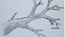 arbresquamatepoursaule