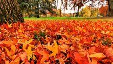 feuilles-mortes-autommne-620x240